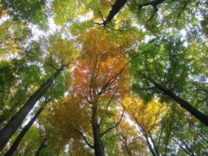 Herbstbild.N.K.3