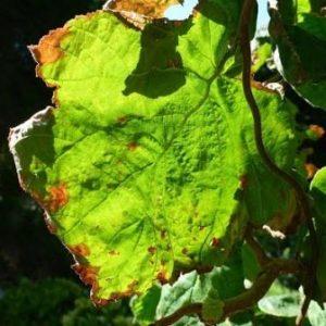 Herbstbild.N.K.2
