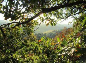 Herbstbilder Fotografie