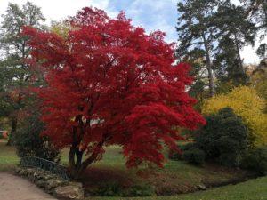 Herbstimpressionen von N. Köller