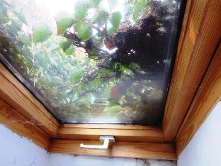 Fensterbegrünung