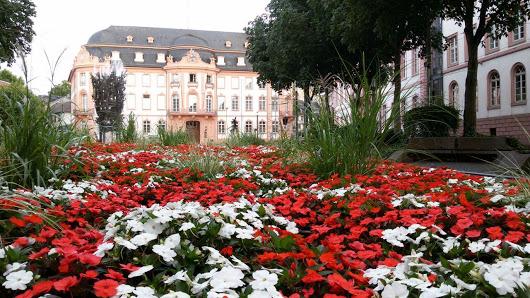 Immobilien in Mainz und Vororten gesucht