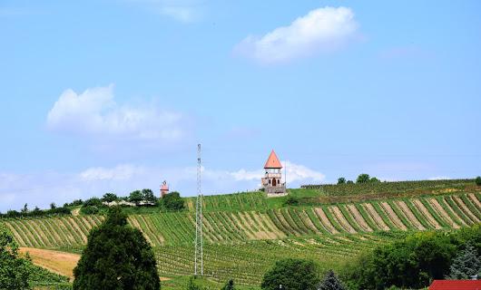 Immobilien in Rheinhessen gesucht