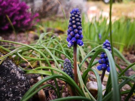 Bilder zum Frühlingsanfang