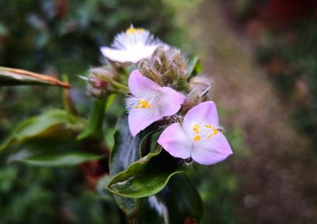 Gartenbild 1
