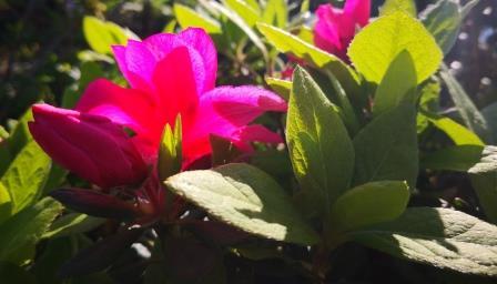 Sonnenlicht, Gartenbilder im April