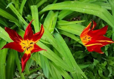 Gartenbilder Im April Baugutachter Blog Rund Um Immobilien