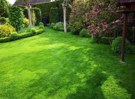 Gartenbilder im Mai 1