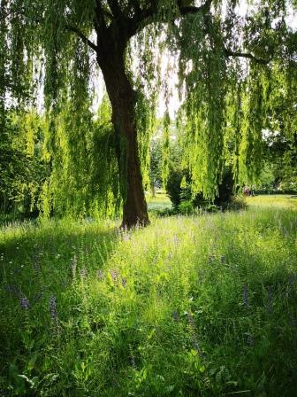 Baum im Garten - Baumschutzsatzung