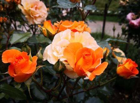 Gartenbild