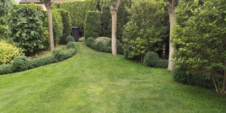 Gartenbilder im Juli, Buchsbäume