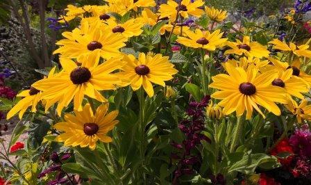 Gartenbilder im Juli 3