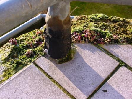 Bepflanzungen rund um Haus und Garten - 5