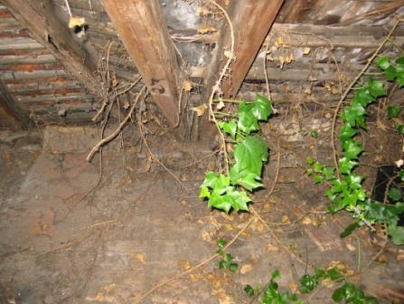 Pflanzen im Spitzboden