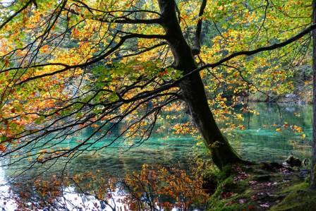Fotografieren im Herbst N. Köller
