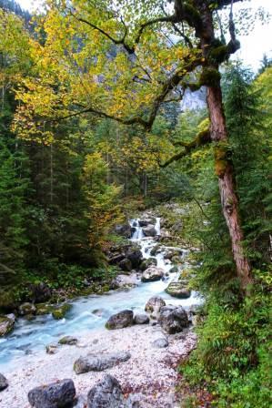Naturfotografie im Herbst N.Köller