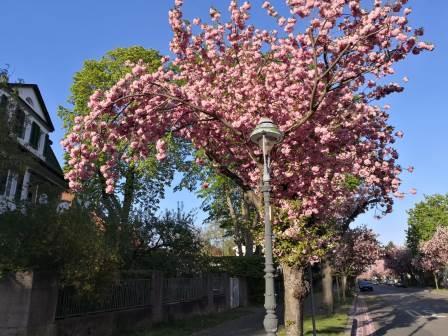Fotografie in Mainz: Ritterstraße