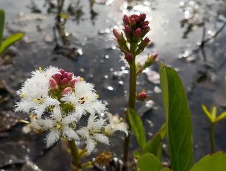 Naturfotografie Wasserpflanzen
