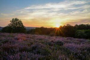 Sonnenuntergang-am-Heideblick